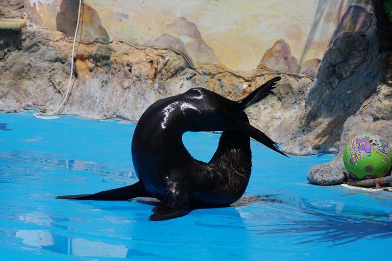 фото анапа дельфинарий