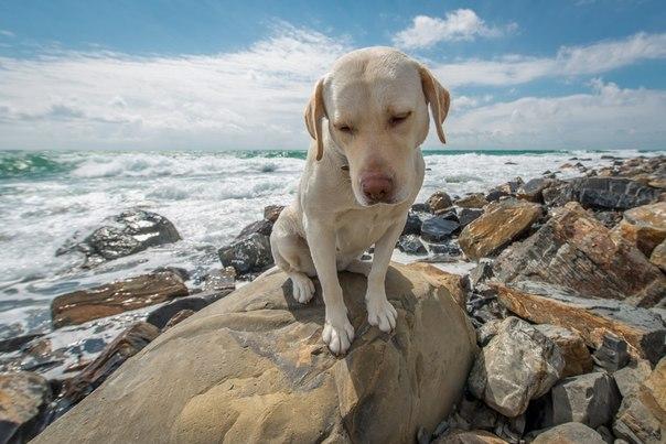 Собака на море в Анапе