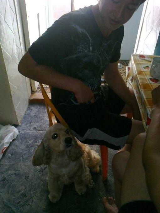 фото Балу собачка хозяйки