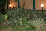 Гостевой дом «Парус» (эконом) - подробное описание