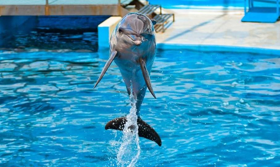 В Краснодарском крае откроют рестораны, дельфинарии, зоопарки и туристические объекты. фото