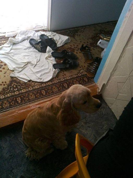 Собачка хозяйки Балу
